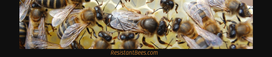ResistantBees